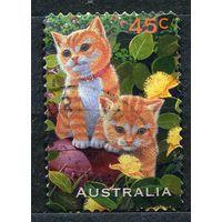 Кошки, котята. Австралия. 1996