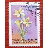 Узбекистан. Цветы. ( 1 марка ) 1993 года.