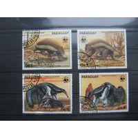 Марки - фауна, броненосец, Парагвай