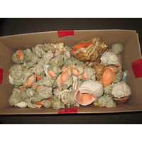 Ракушки  для аквариума.