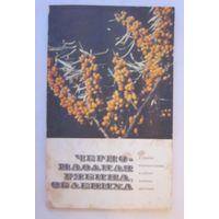 Черноплодная рябина, облепиха и другие перспективные плодово-ягодные растения (выращивание и домашняя переработка)