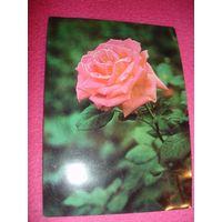 Открытка Болгарии Розы