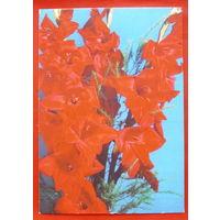 Цветы. Чистая.  1990 года.