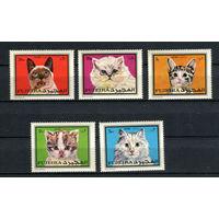 Фуджейра - 1970 - Коты - [Mi. 588-592] - полная серия - 5 марок. MNH.