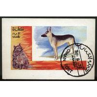 Кошки. Оман. 1972. Блок. Гаш.