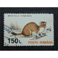 Румыния. Фауна.