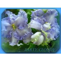 Фиалка Party Cloudy детка.