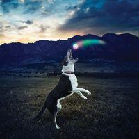 Светодиодный мячик для собак