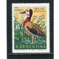 Аргентина. Белолицая свистящая утка