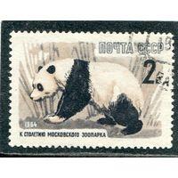 СССР 1964.. Бамбуковый медведь