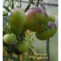 Семена томата Желтый дракон
