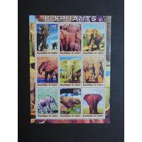 Слоны.  Гвинея. 2000г.
