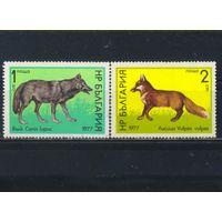 Болгария НР 1977 Волк Лиса #2597-8