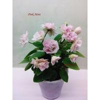 Фиалка мини Pink Mint трейлер - розетка взрослая (фото в лоте)