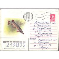 1985 год ХМК А.Исаков Щука 85-555 3