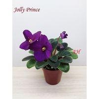 Фиалка Jolly Prince полумини - св. лист