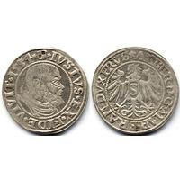Грош 1534, Пруссия (ленник Польши), Альберт Гогенцоллерн. Вариант портрета с короткой бородой