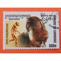 Камбоджа. Фауна.