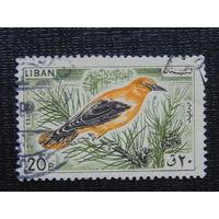 Ливан. Птицы.